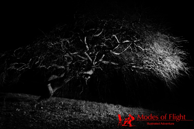 Black and white tree forest landscape photography
