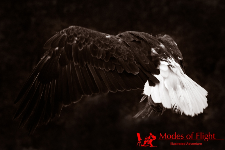 Modes of Flight, #ModesofFlight, Art, Photography, Illustration, Graphics, Art Marketing, Art Networking